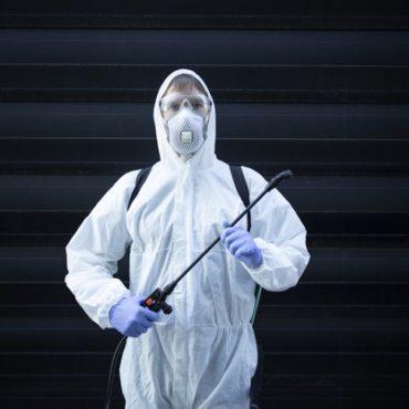 Ratos: visitas indesejadas que podem causar estragos